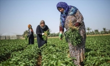 عاملات في أراضي الحدود: معاناة الغزيات في المناطق المهمشة