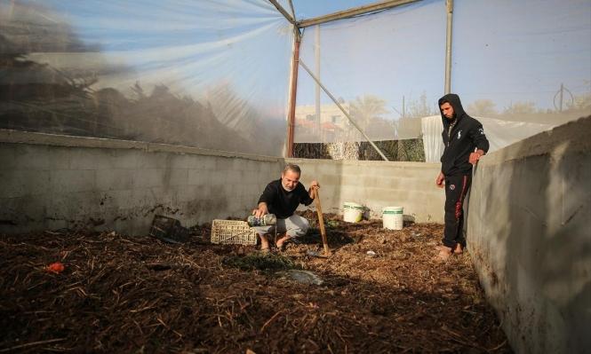 غزّة: المخلفات الزراعية تتحوّل إلى أسمدة