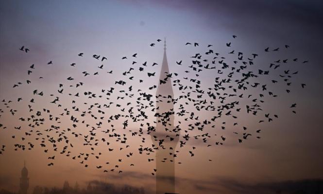 أسراب العصافير في ولاية كوتاهية غربي تركيا