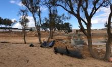 النقب: أعمدة الضغط العالي تخترق القرى العربية