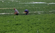 الاحتلال يمنع تصدير المنتجات الزراعية الفلسطينية للخارج