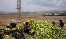 إسرائيل تمنع تصدير المنتجات الزراعية الفلسطينية عبر الأردن