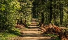 غابة لا تيغرا تعاني من تلوّث بيئي إثر انتهاك أميركا لها
