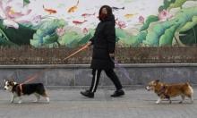 كورونا: تقرير يهم أصحاب القطط والكلاب