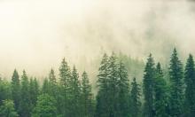 الغابات الإستوائية تفقد قدرتها على امتصاص ثنائي أكسيد الكربون
