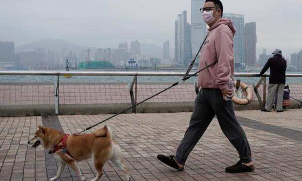 تدريب كلاب قد يمكنها الكشف عن الإصابة بكورونا بالشّم