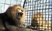 أكبر حدائق الحيوان بمصر تحتضن الحيوانات والحراس بظل كورونا