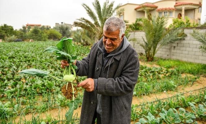 الزراعة ملاذ الفلسطينيين خلال العزلة المنزلية