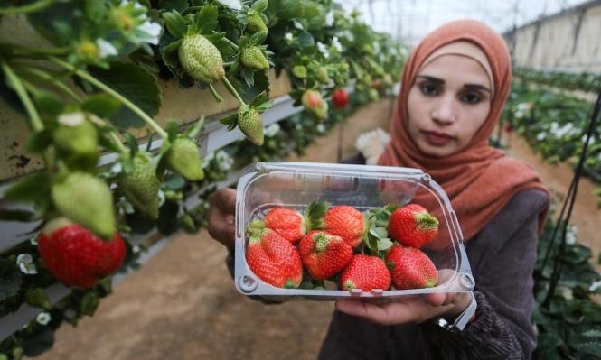 الزراعة في زمن الوباء.. داءٌ لكل كساد