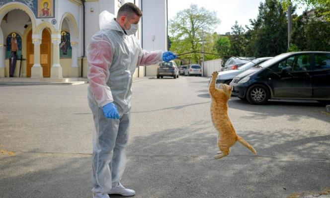 فرنسا: قط مصاب بكورونا وتحذيرات لأصحاب الحيوانات