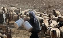 تصاعد اعتداءات المستوطنين على القطاع الزراعي في الأغوار