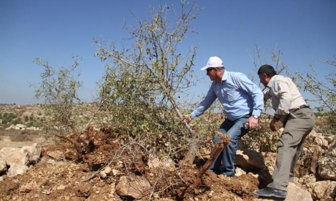 اعتداءات المستوطنين على الفلسطينيين وأراضيهم تتواصل بالضفة والقدس