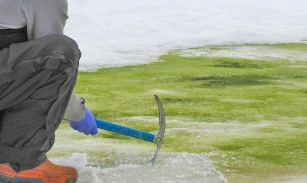 """أنتاركتيكا تكتسي بـ""""اللون الأخضر"""".. بسبب موجات الحرارة العالية"""