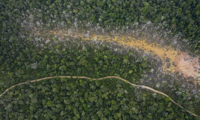 الاحتباس الحراري قد يؤدي لانبعاث الكربون من الغابات المداري