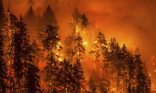حرائق واسعة تلتهم غابات إيرانيّة