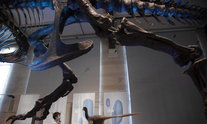 مستحاثات تكشف فصيلىة جديدة من الديناصورات