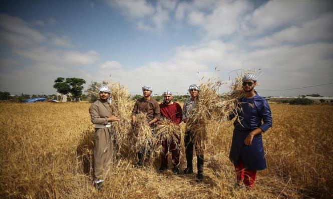 غزة: مبادرة شبابية لدعم صمود المزارعين أمام انتهاكات الاحتلال