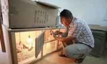 مبادرة فلسطينية شخصيّة لإنقاذ طائر الحجل من الانقراض