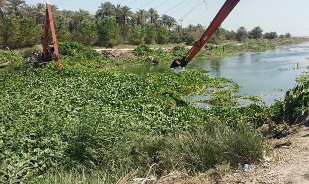 """""""زهرة النيل"""".. تمتص مياه العراق وتختنق تحتها كل حياة"""