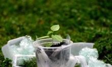 دراسة جديدة:  البلاستيك يخفض حجم المحاصيل الزراعية