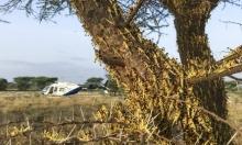 موجة جديدة من الجراد الصحراوي تغزو شرق أفريقيا