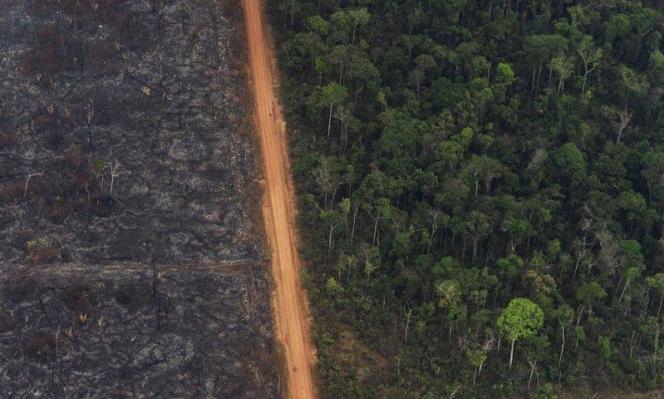 قطع أشجار الأمازون يبلغ رقمًا قياسيًا في 2020
