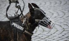 تشيلي: كلاب بوليسية تتعرف على المصابين بكورونا
