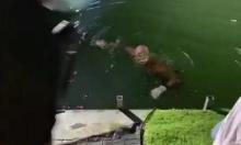 انتشال جثة غريق من بحيرة طبرية