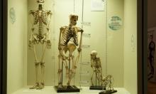 """""""الإنسان استوطن أميركا الشمالية قبل 33 ألف سنة"""""""