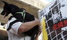 للحد من انتشار الأوبئة: تايوان تمنع التجارة بالحيوانات البريّة