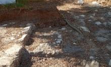 """""""ميزان"""": بلدية يهود تعهدت بعدم نبش القبور في العباسية"""
