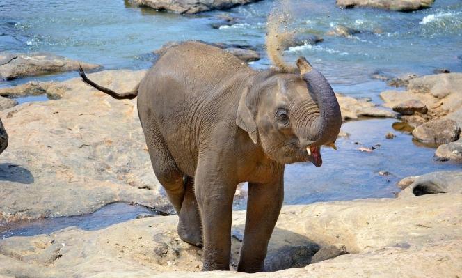 سيرلانكا تمنع استيراد البلاستيك حمايةً للفيلة والأيائل