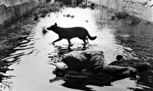 «Stalker» لتراكوفسكي... الفيلم الّذي قتل مخرجه