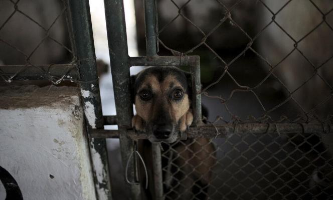 إصابة كلب في الأردن بفيروس كورونا