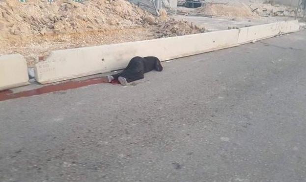 الاحتلال يسلّم جثمان الشهيدة الكعابنة بعد عام على قتلها