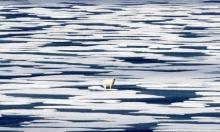"""الأمم المتحدة: """"إذا لم يقتلنا كورونا، فإن تغير المناخ سيفعل"""""""