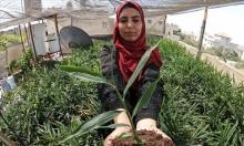 مهندسة زراعيّة فلسطينية توفّر عملها باللجوء لزراعة سطح بيتها