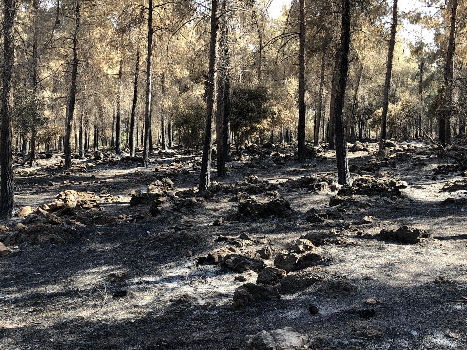 حريق جبال الناصرة.. المزارعون في عين ماهل أكبر المتضررين