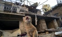 """المعارك في قره باغ: تركيا تدعو إلى """"محادثات رباعية"""" تضم موسكو"""