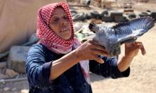سيدة فلسطينية تحمل حمامة بعيد هدم قوات الاحتلال الإسرائيلي منزلها في بلدة يطا جنوب الخليل
