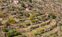 يحصل في القدس... يشجّعون التشجير ويقلعون الأشجار!