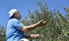 إلغاء إجراء يقيّد دخول مزارعين من الضفة إلى أراضيهم خلف جدار الفصل العنصريّ