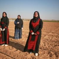الزراعة ملاذ جامعيات غزيّات لمكافحة البطالة