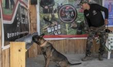 الكشف عن سرطان الثدي بواسطة أنوف الكلابفي تونس