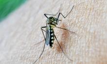 """""""أوكسفورد"""" تدخل مرحلة التجارب الأخيرة للقاح ضد مرض الملاريا"""