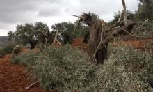 اعتداءات واسعة لقوات الاحتلال والمستوطنين في الضفة الغربية والقدس