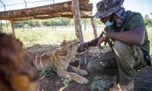 السودان: تأسيس محمية طبيعية لرعاية الحيوانات المهددة بالانقراض
