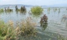 بحيرة طبرية: ارتفاع منسوب المياه بـ3 سنتيمترات في اليوم الأخير