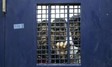 """سجن """"جلبوع"""" يُعلن تأجيل تطعيم الأسرى"""