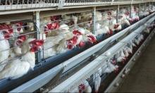 60 بؤرة تفش لإنفلونزا الطيور بفرنسا